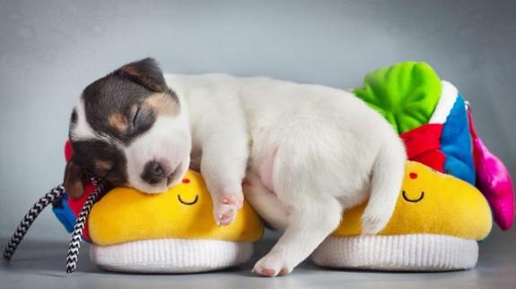 5 причини да си вземеш куче - Magazine.bg (4)