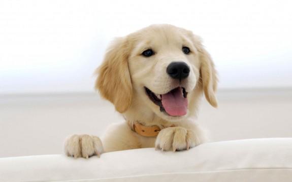 5 причини да си вземеш куче - Magazine.bg (7)