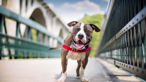 5 причини да си вземеш куче - Magazine.bg (5)