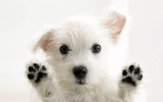 5 причини да си вземеш куче - Magazine.bg (6)
