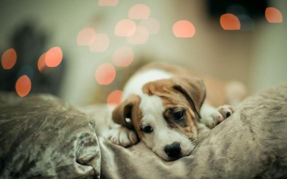5 причини да си вземеш куче